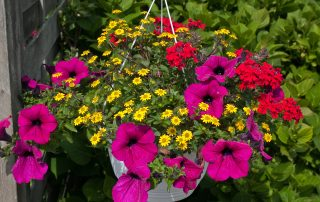 beautiful hanging flowerpot