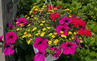beautiful hanging flowerpot
