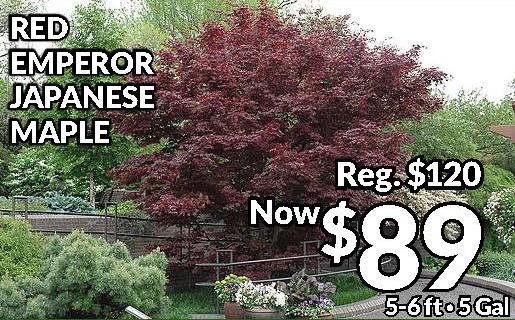 red emperor sale